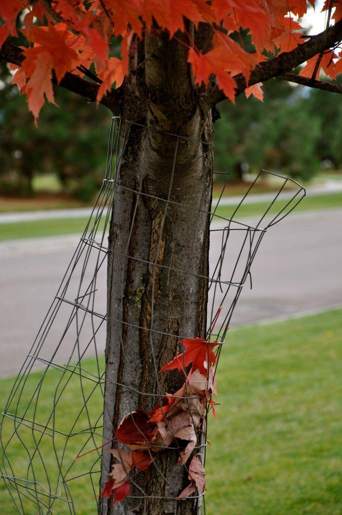 tree saving leaves