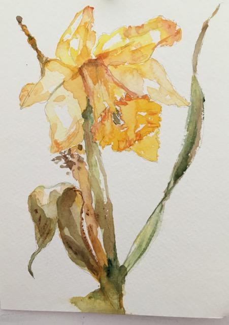 daffodil - 1