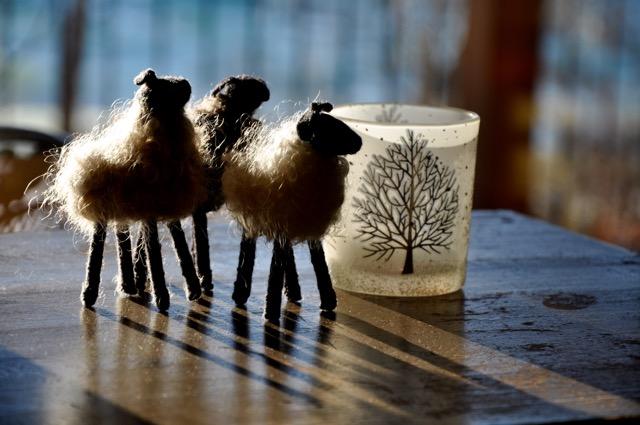 solstice-sheep-1
