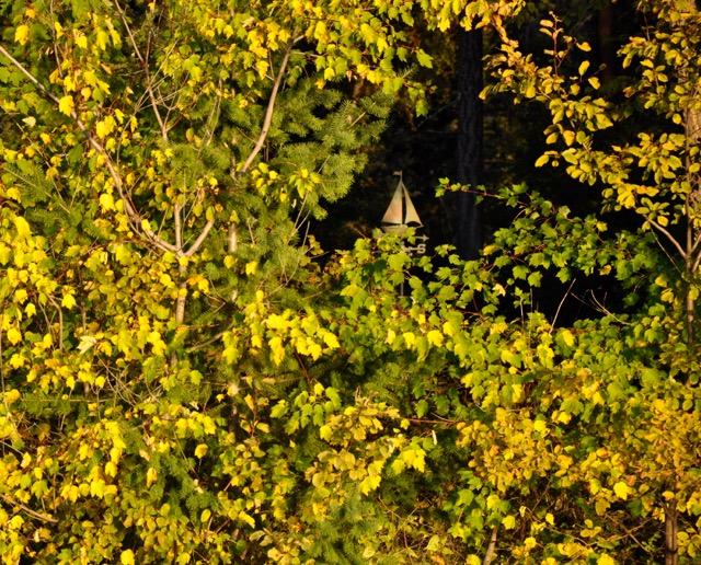 sailing into autumn - 1
