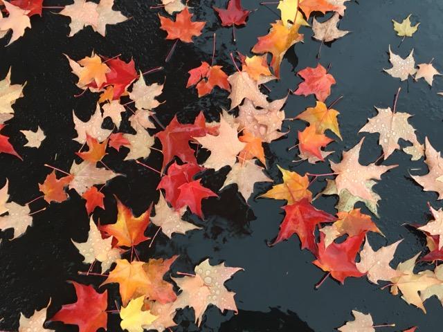fall, falle - 1